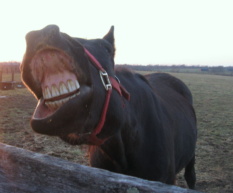 Butler horse's mouth